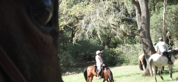 Neubee's first official trail ride w/ COE MAU